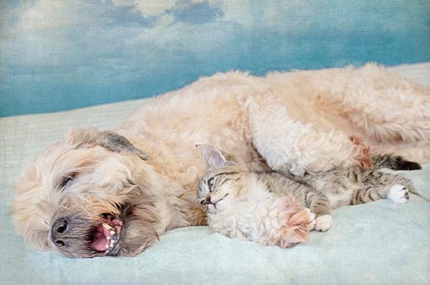 kutya alvás közös