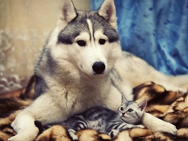 kutya  kiscica nagy