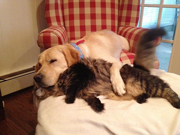 kutya ágy fekvés