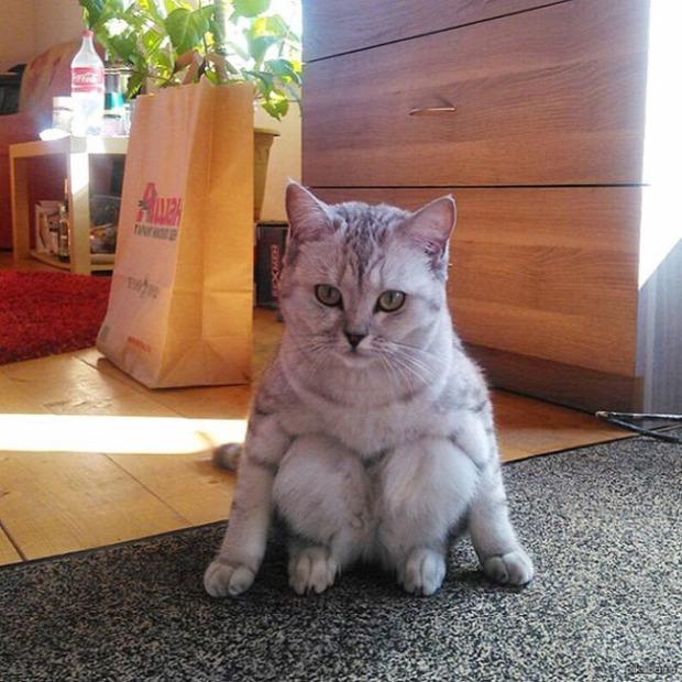ül üldögél fenék