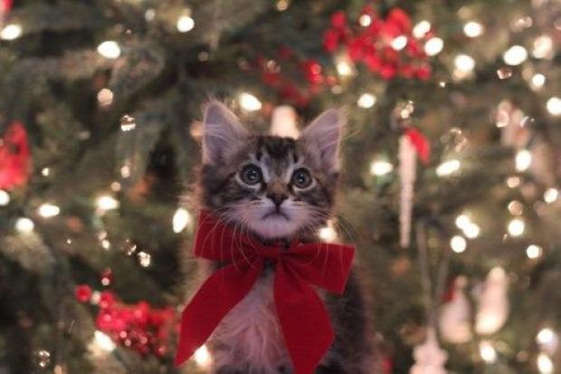 karácsony karácsonyfa fenyőfa