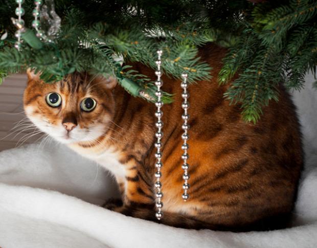 karácsony ünnep mérges ijedt