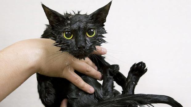 fürdés