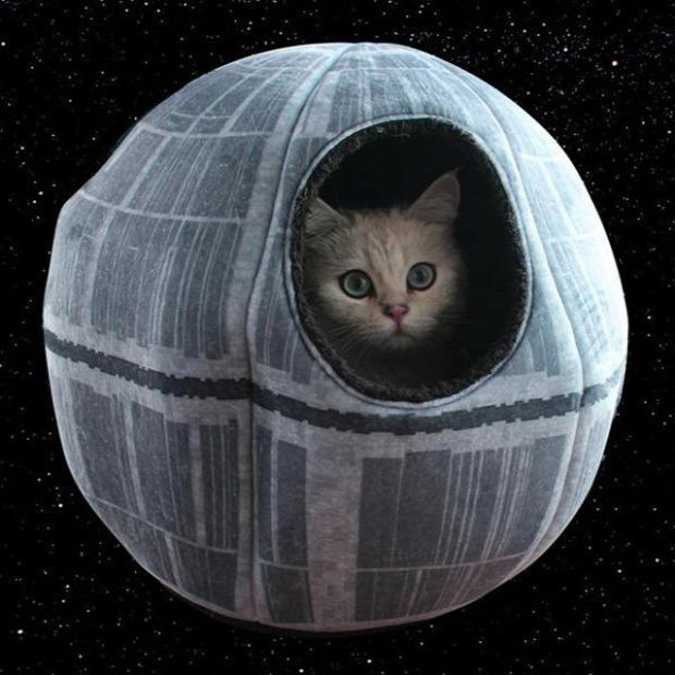 macskafészek halálcsillag