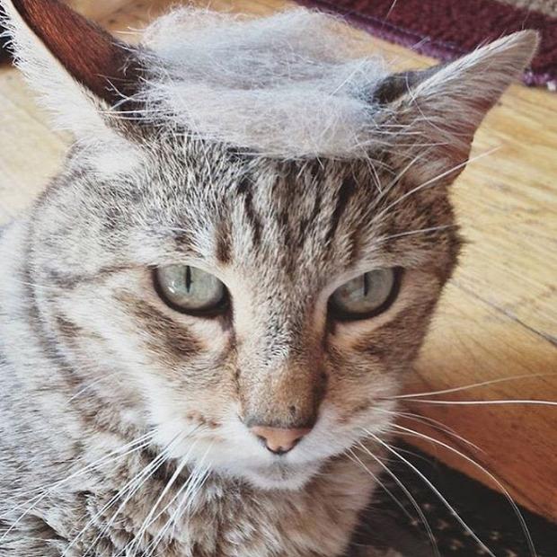 elnök amerikai usa Donald Trump