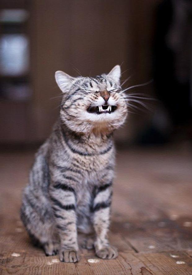 fog mosoly fenyegető