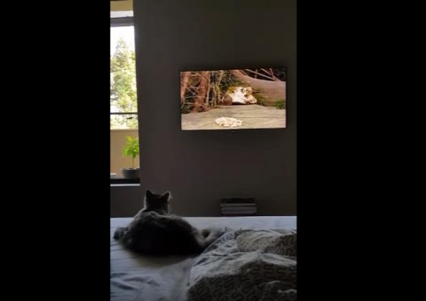 vadász hiba tévedés tévé