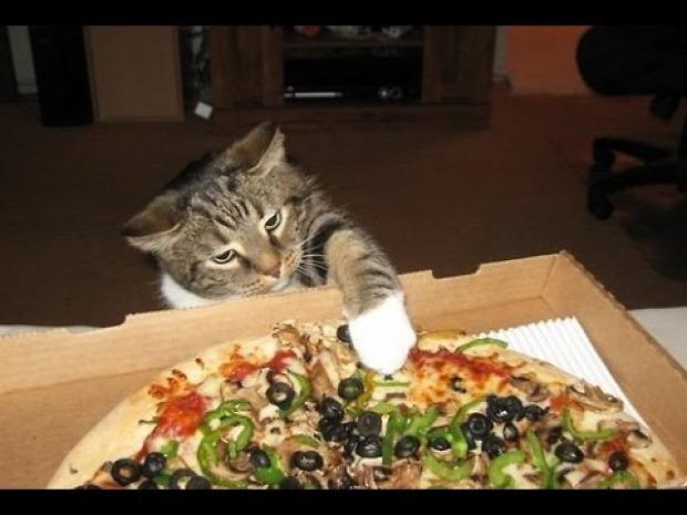étel kaja tolvaj lop