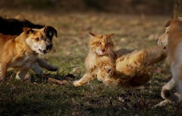 balhé veszekedés kóbor kutya