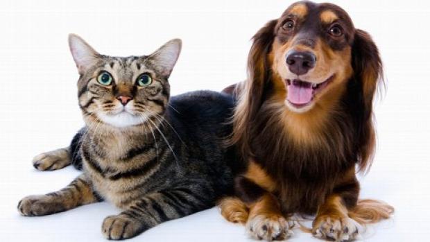 macska okos kutya teszt vizsgálat evés