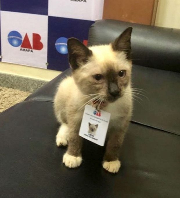 Homeless-cat-hired-employee-dr-leon-advogato-4-5d88a9a1e97af-70048a0