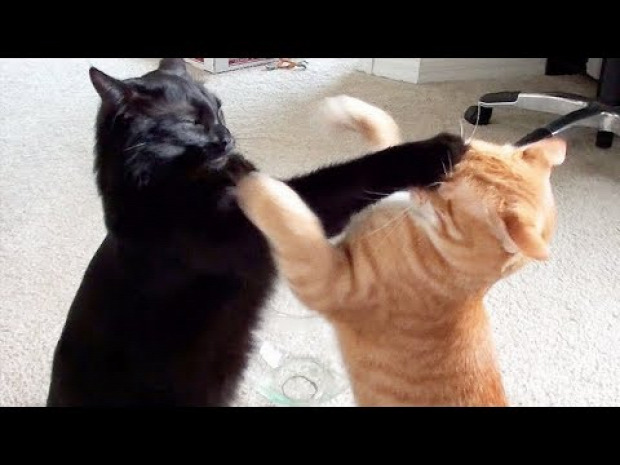 ninja nindzsa bunyó verekedés