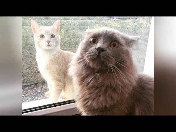 kis  cica nagy macska videó vicces nevetés