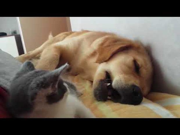 kutya alszik ébreszt harap