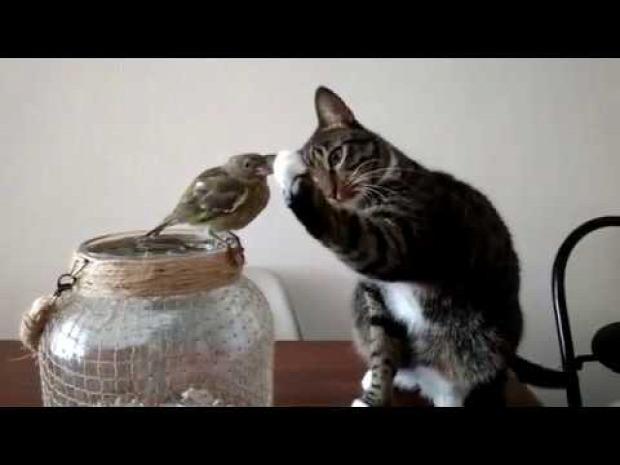 madár simogatás