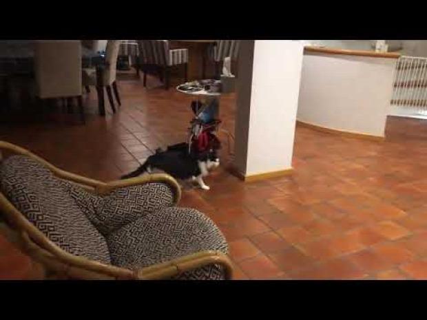 kutya verekedés bújkál