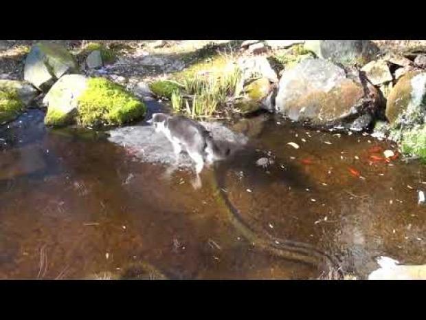 jég horgászás vadászat