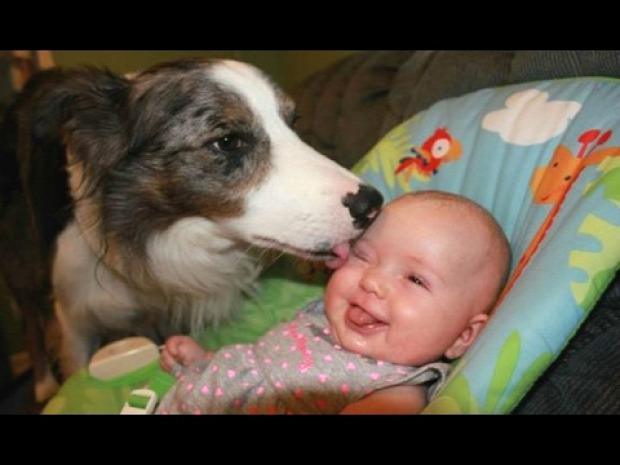 kutya baba újszülött