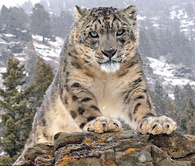 hópárduc vadászat
