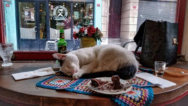 isztambul kóbor kávézó kikötő barátságos