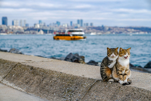 isztambul kikötő
