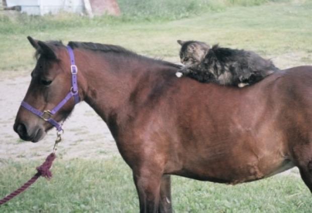 ló lovas