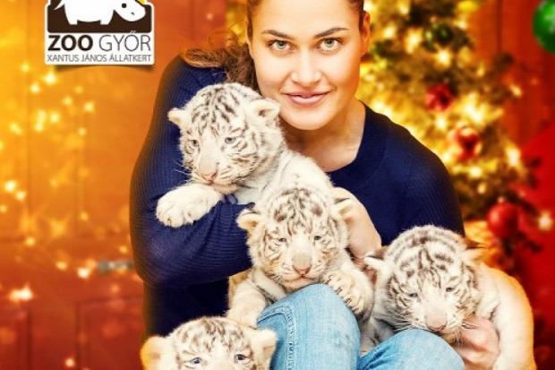 állatkert győr kölyök fehér tigris látogatás