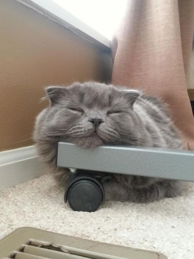 lusta alvó