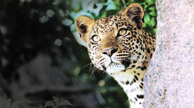 India  jaguár