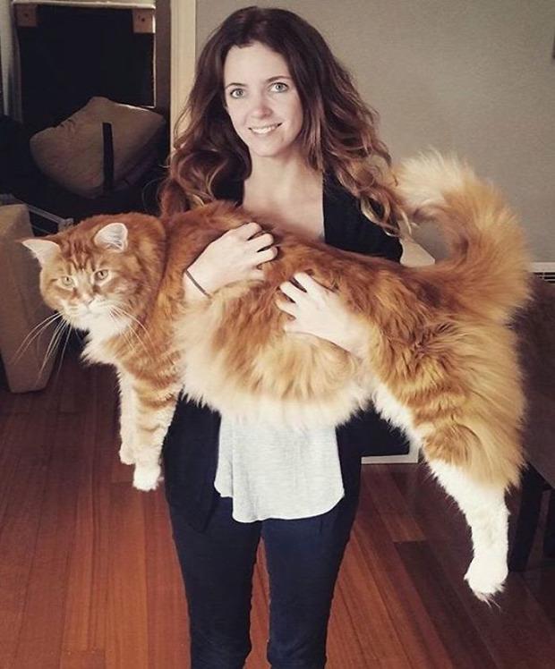 Omar leghosszabb macska ausztrál