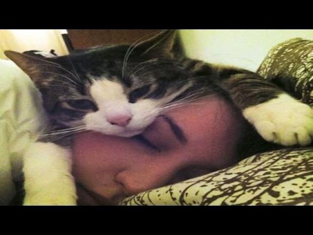 kutya  macska gazdi ébreszt