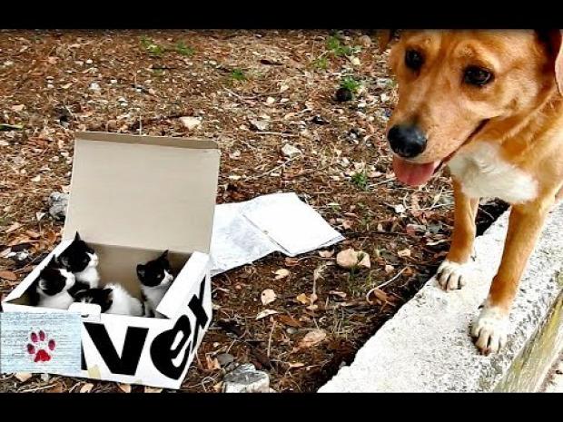 doboz kölyök kutya