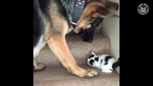kutya lépcső