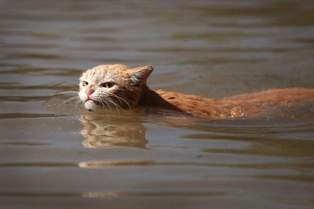 Texas  hurrikán macska mentés