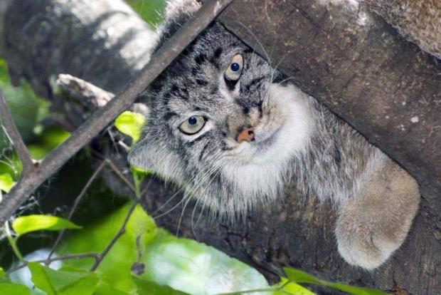 Szeged állatkert vadaspark mamul pusztai macska