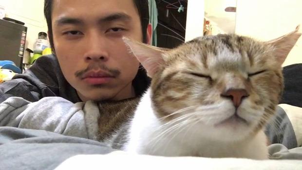 gazda macska hasonlít hatással van alkalmazkodik