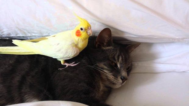 madár véd