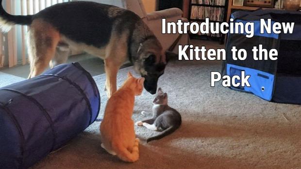 új cica családtag