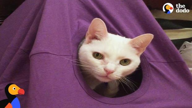 DIY csináld magad macska sátor