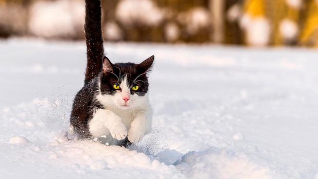 hó első találkozás