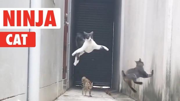 ninja ugrás harc