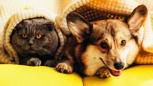 macskaű kutya