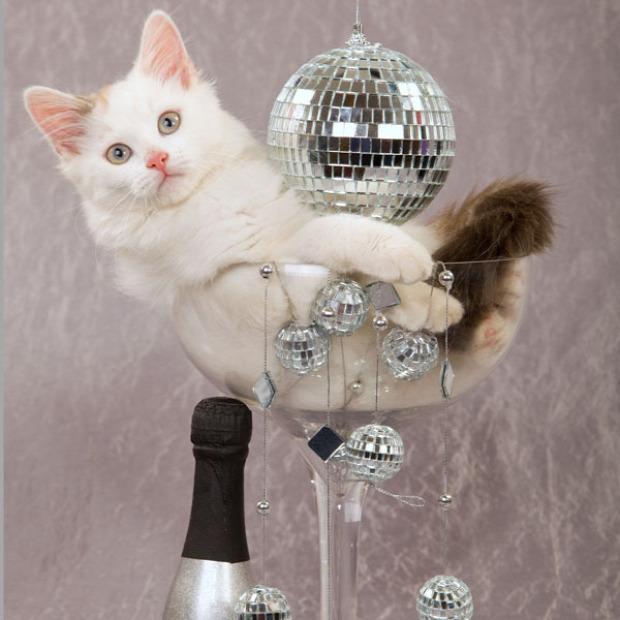 macska újév ének