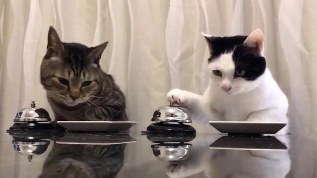 pincér csengő vacsora eledel kér