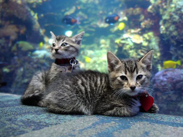 Atlanta akvárium
