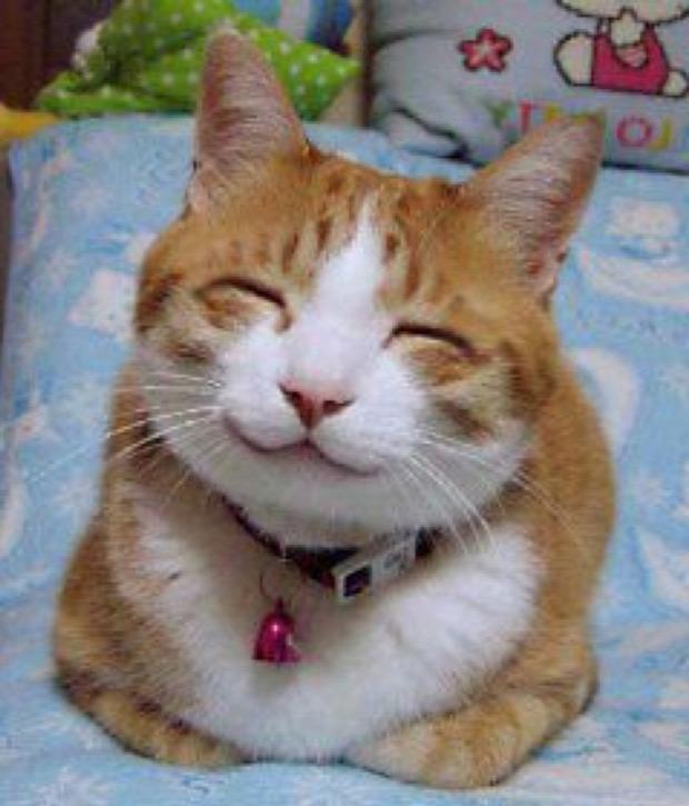 mosoly elégedett