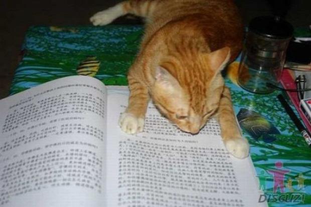 olvas könyv kínai