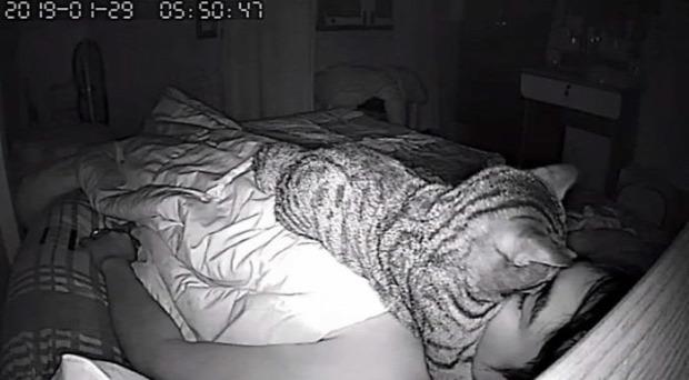 éjszakaű kamera fotó alszik gazdi