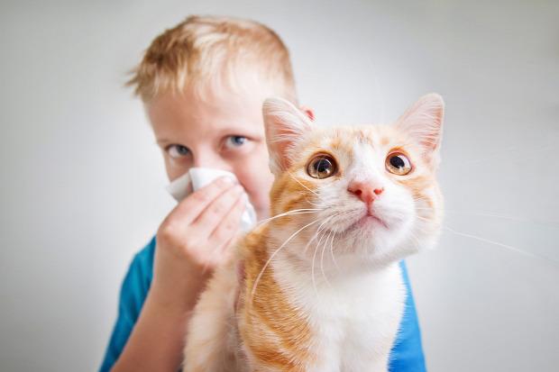 allergia gyógyszer oltás macskaszőr