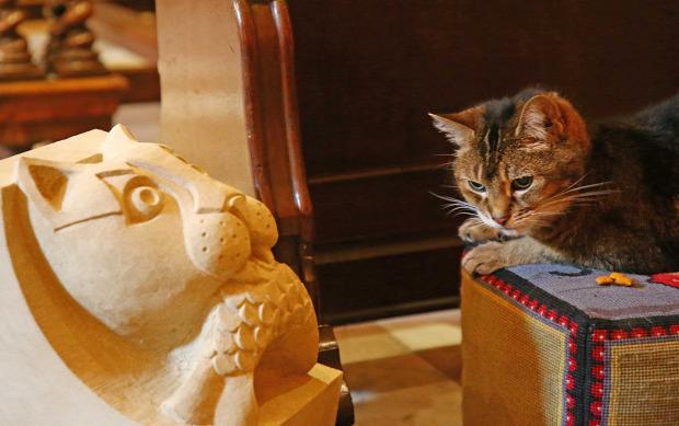 London templomű katedrális macska
